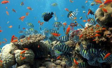 Aquarium-ul din Beihai