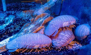Aquarium-ul din Key West