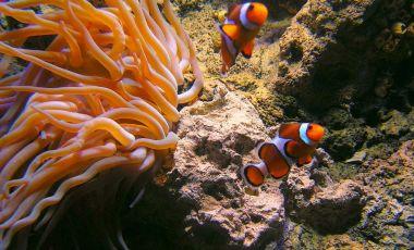 Aquariumul din Kuweit
