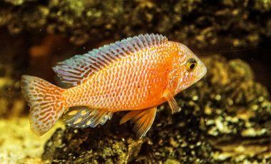 Aquariumul din Paphos