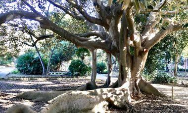 Gradina Botanica din Cagliari