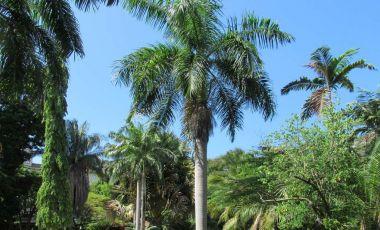 Gradina Botanica din Dar es Salaam