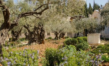 Gradina Ghetsimani din Ierusalim