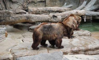 Gradina Zoologica din Denver
