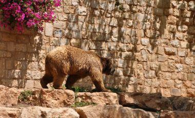 Gradina Zoologica din Haifa