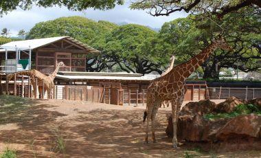 Gradina Zoologica din Honolulu
