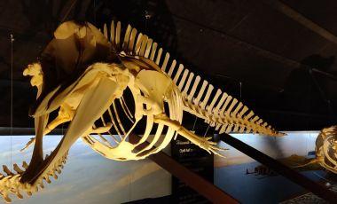 Muzeul Balenei din Husavik