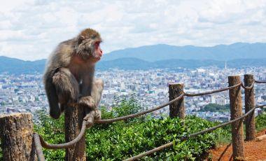 Parcul Maimutelor din Kyoto