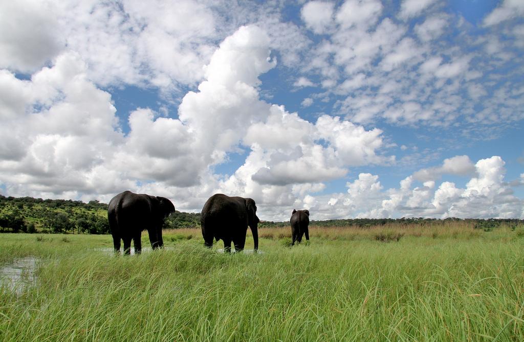Savana din Botswana