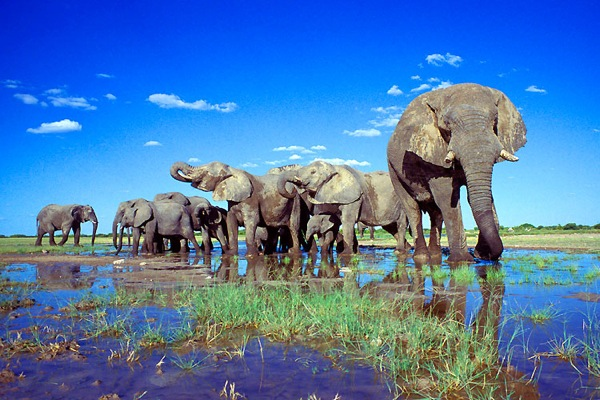 Parcul National Etosha