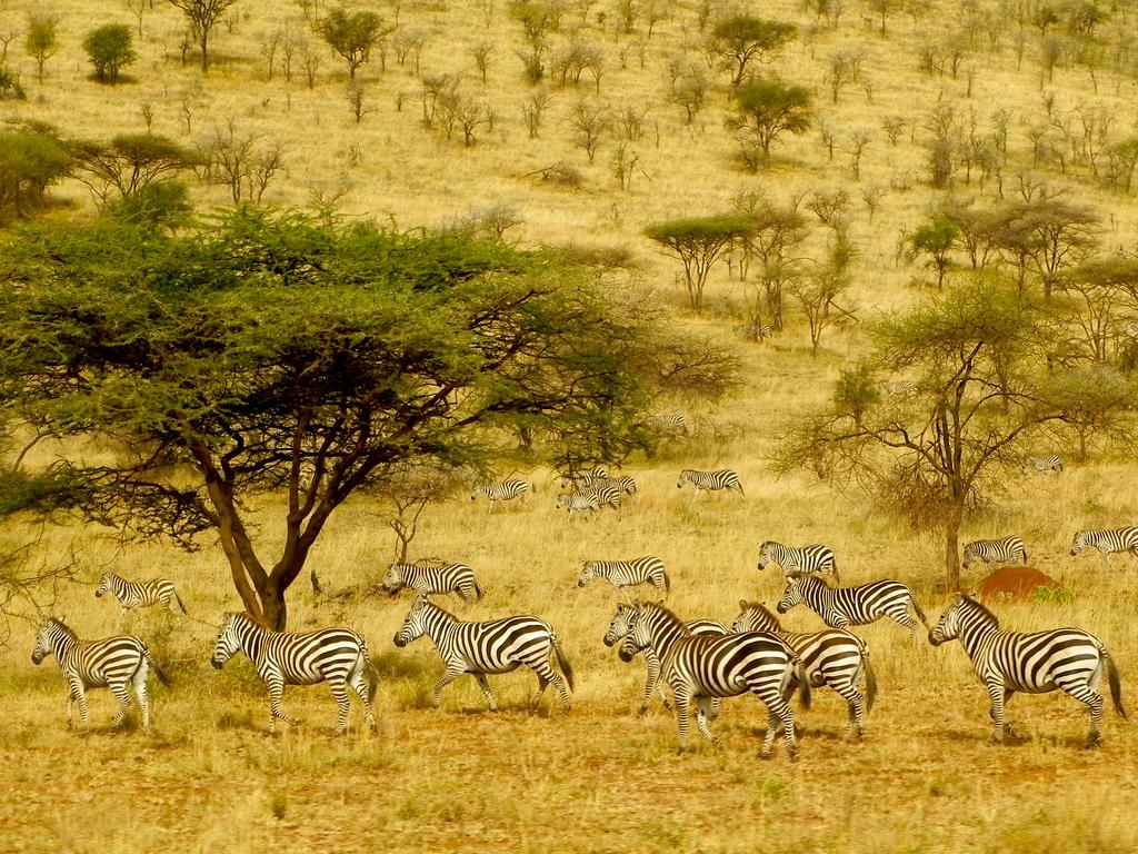Parcul National Serengeti, Tanzania